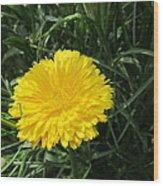 Buttery Single Yellow Flower Wood Print