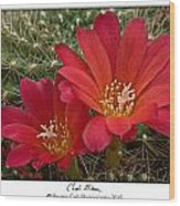 Cacti Bloom Wood Print