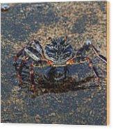 Crab And Reflection Wood Print