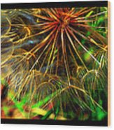 Dandelion Dreamtime Wood Print