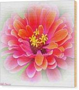 Flower On White Wood Print