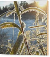 Frost On Willow At Sunrise Wood Print