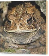 Grumpy Toad Wood Print