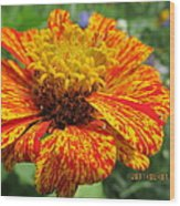 Lovely Orange Speckles Wood Print