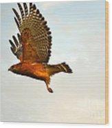 Majestic Red Shoulder Hawk Wood Print