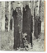 Muleshoe Trees Infra Red Wood Print