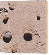 Paws On The Beach Wood Print
