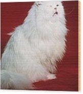 Persian Cat In Distress Wood Print