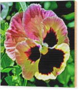 Pink And Yellow Pansy Wood Print