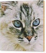 Pretty Blue Eyes--mia Wood Print