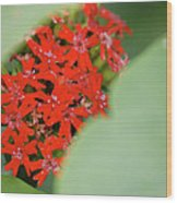 Red Butterfly Buds By Jammer Wood Print
