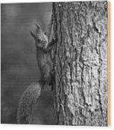 Red Squirrel In Bw Wood Print
