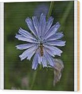 Spring Flower And Hoverfly Wood Print