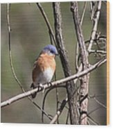 Sucarnoochee River - Bluebird Wood Print