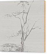Tree In Summerhill Lake Wood Print