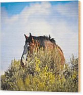 Wild Horse In The Sage Wood Print