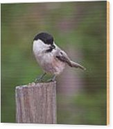 Willow Tit With Seeds Wood Print