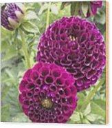 Wow Pink Dahlia Orbs Wood Print