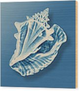 X-ray Of A Conch Shell Wood Print