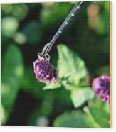 0003 Dragonfly Yoga On A Salvia Burgundy Candle Wood Print