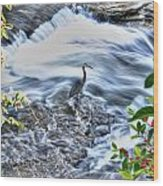 0005 Blue Heron At Glen Falls Williamsville Ny Wood Print