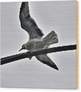 001 Gull To Out Do Wallenda Wood Print