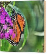 001 Making Things New Via The Butterfly Series Wood Print