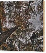 0014 Letchworth State Park Series Wood Print