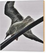 002 Gull To Out Do Wallenda Wood Print