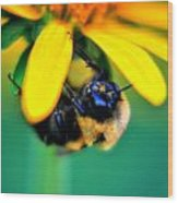 003 Sleeping Bee Series Wood Print