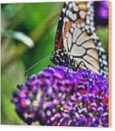 012 Making Things New Via The Butterfly Series Wood Print