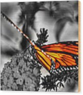 014 Making Things New Via The Butterfly Series Wood Print