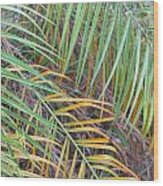 014 Palm Leaves Wood Print