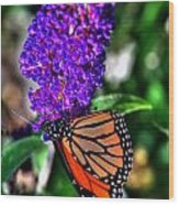 015 Making Things New Via The Butterfly Series Wood Print