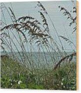 019 Sea Oats Wood Print