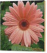 04-19-09 Gerbera Daisy Wood Print