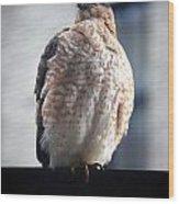 04 Falcon Wood Print