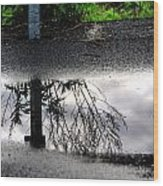 05 Reflecting Wood Print