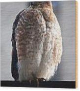 06 Falcon Wood Print