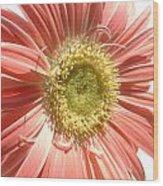 0620a-003 Wood Print