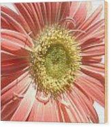 0620a-004 Wood Print