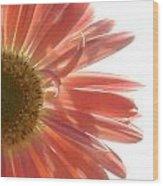 0676a-6 Wood Print