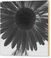 0683a6 Wood Print