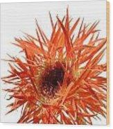 0688c-003 Wood Print
