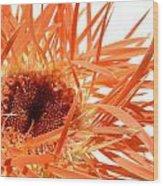 0689c-003 Wood Print