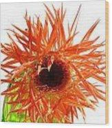 0690c-017 Wood Print