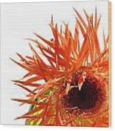 0690c-020 Wood Print