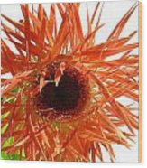 0690c-024 Wood Print