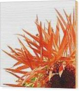 0690c-025 Wood Print