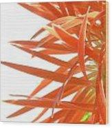 0692c-004 Wood Print
